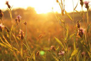 sunset-1284305_960_720